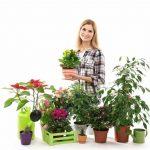 непрехотливые комнатные растения
